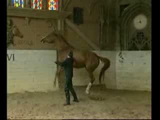 Ххх лошадь