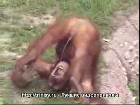 porno-video-drochki-bez-registratsii