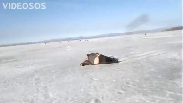 клюет хоть с тюленем