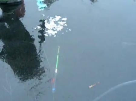 рыба утащила удочку видео